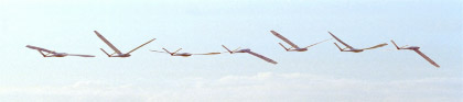 flight pictures how ornithopters fly